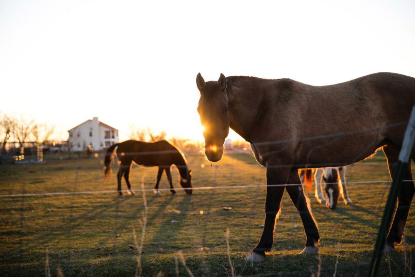 Five Benefits of Equine Assisted Psychotherapy