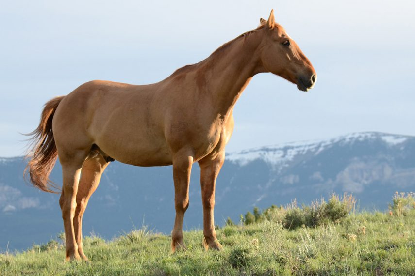 Horses and Healing: The Possibilities of Equine-Assisted Therapy in Bipolar Disorder Treatment